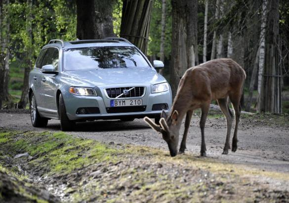 Sistema di sicurezza Volvo Animal Detection